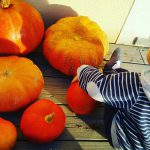 Cest bientt Halloween !!!!halloween soon pumpkin pumpkins courge autumn automnehellip